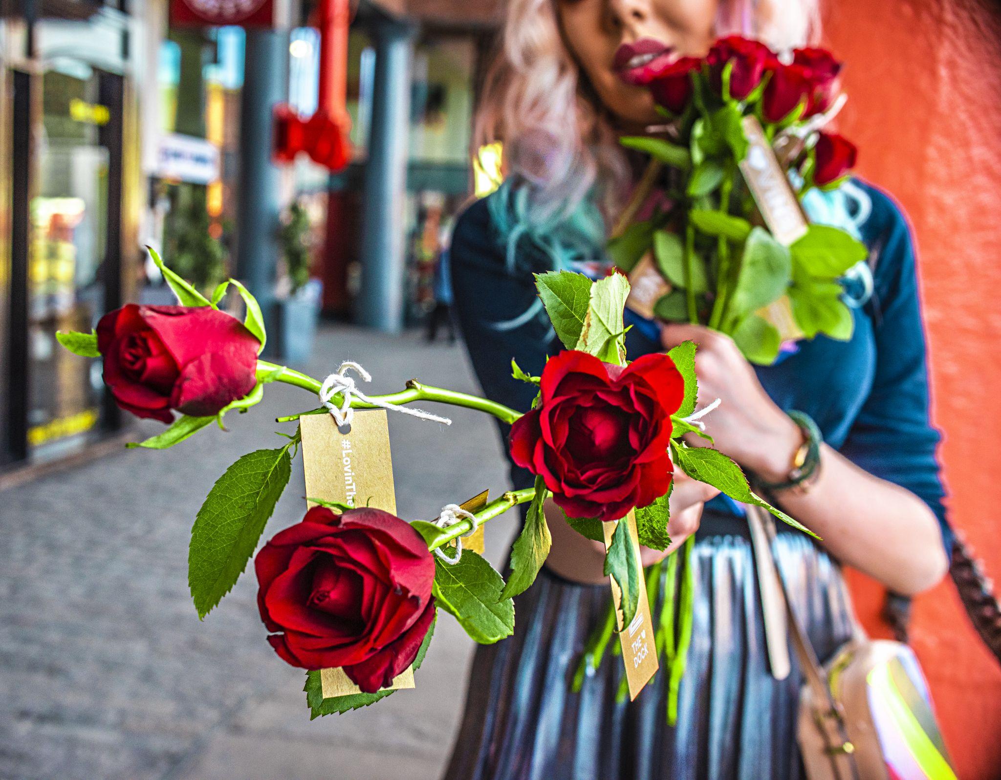 stephi lareine roses