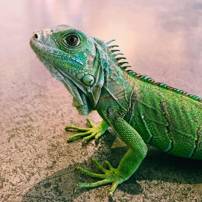 reptile photograph