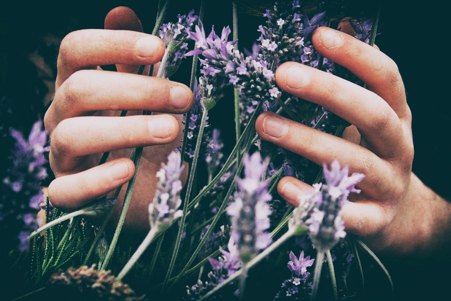 AROMATHERAPY AND MENTAL HEALTH; AN INTRODUCTORY GUIDE