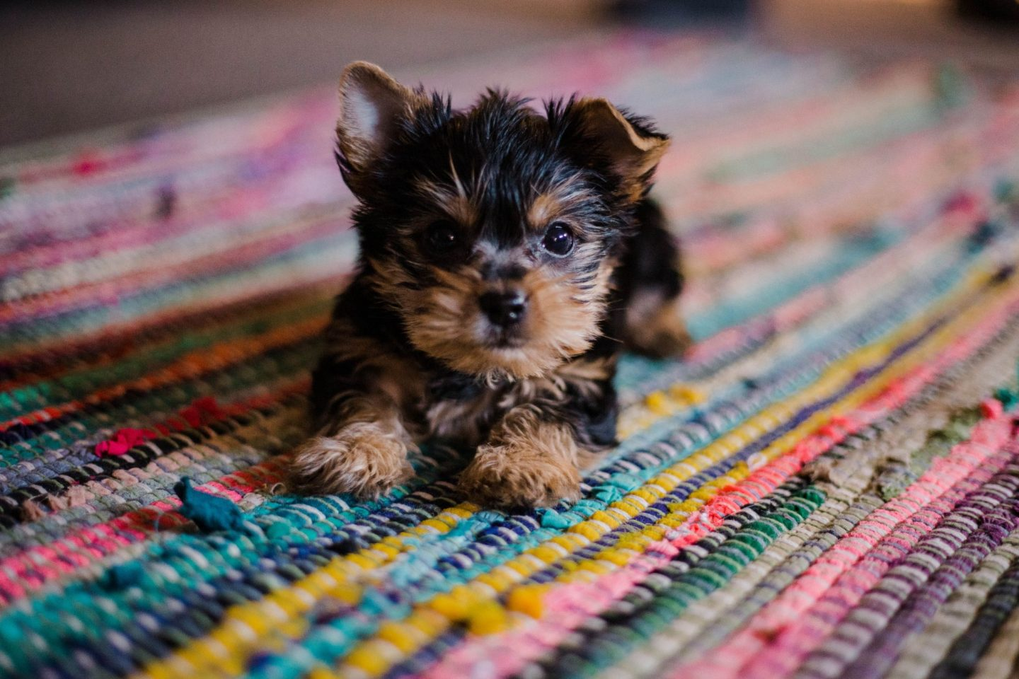 HOW TO PREPARE YOUR HOME FOR A PUPPY
