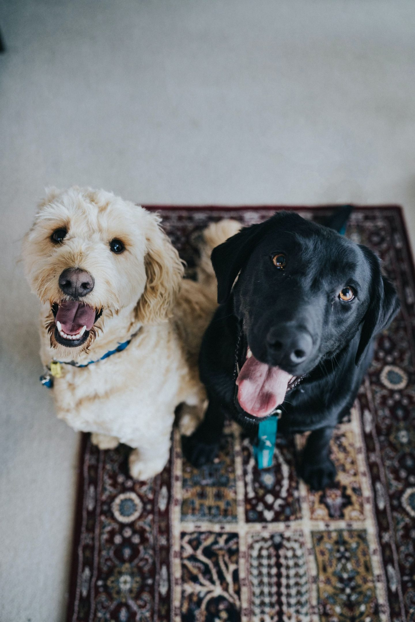 5 ELECTRICAL SAFETY PRECAUTIONS FOR YOUR PETS