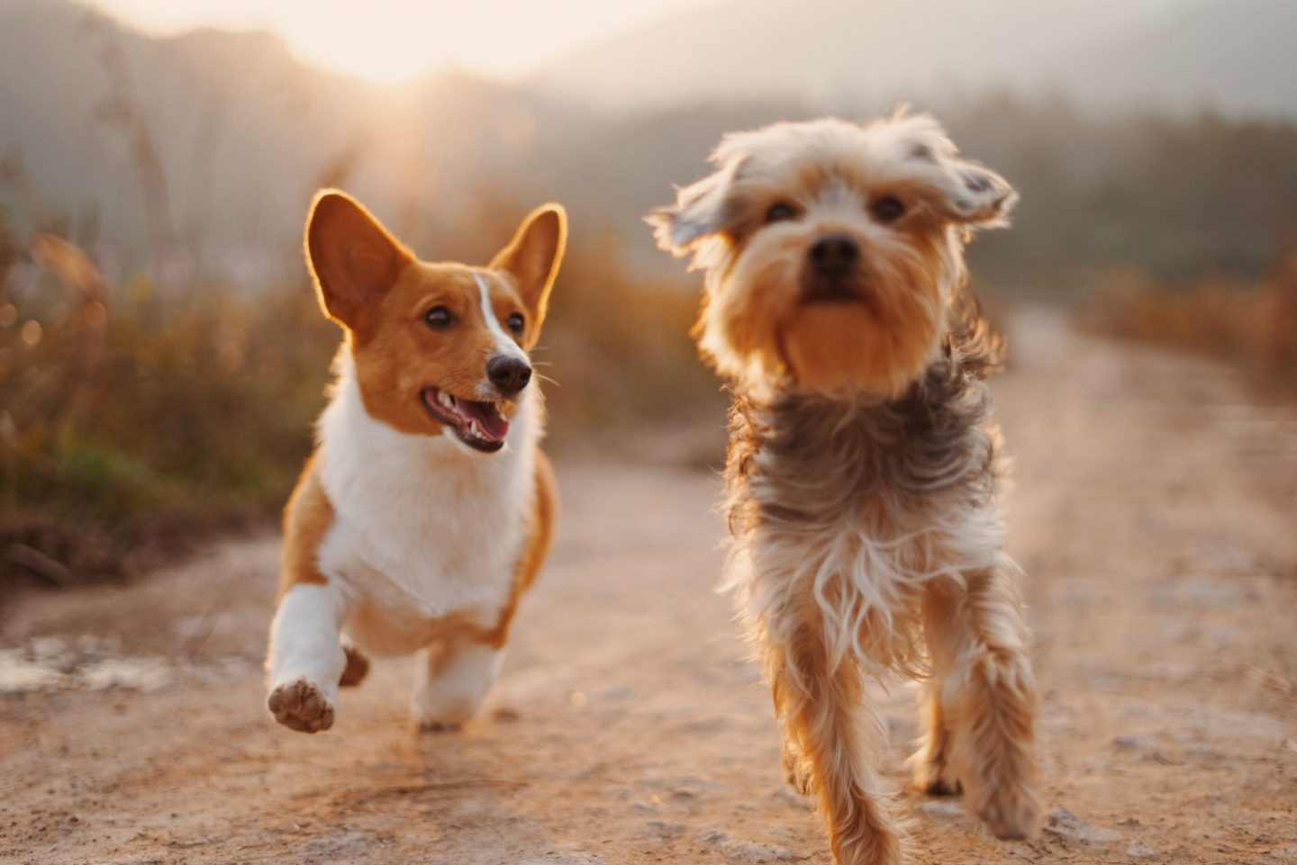 PET INSURANCE IS A THING: HERE'S HOW TO GET IT