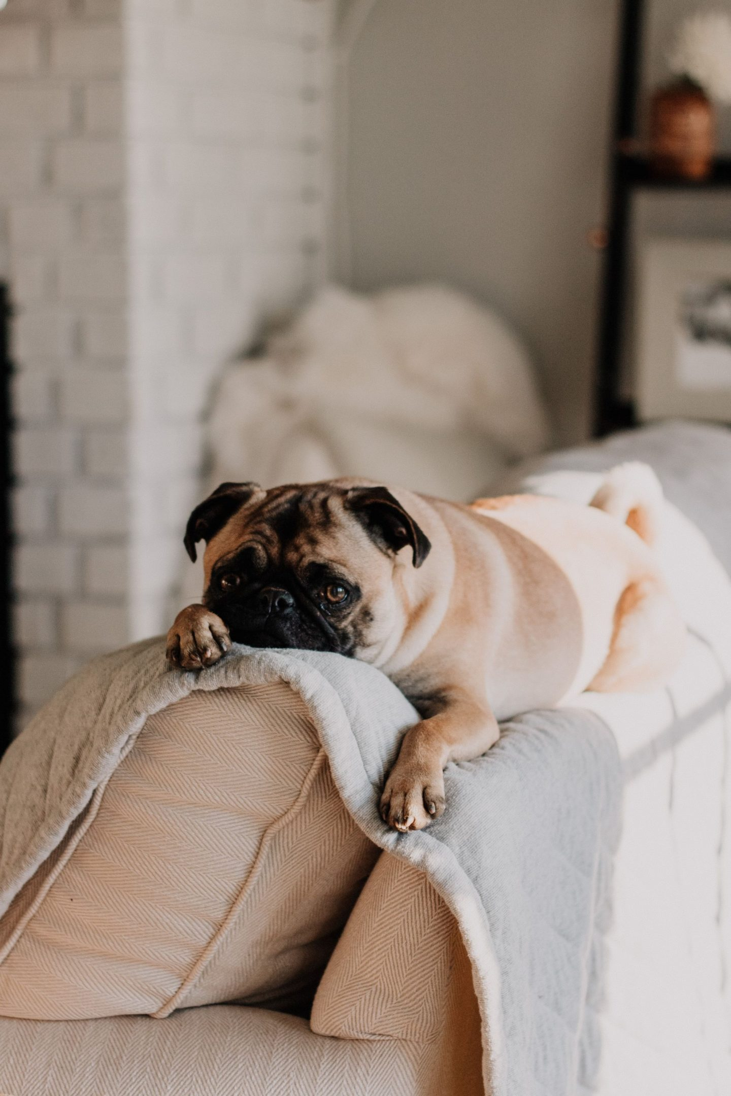 WORRIED YOUR PET WILL RUIN YOUR FURNITURE