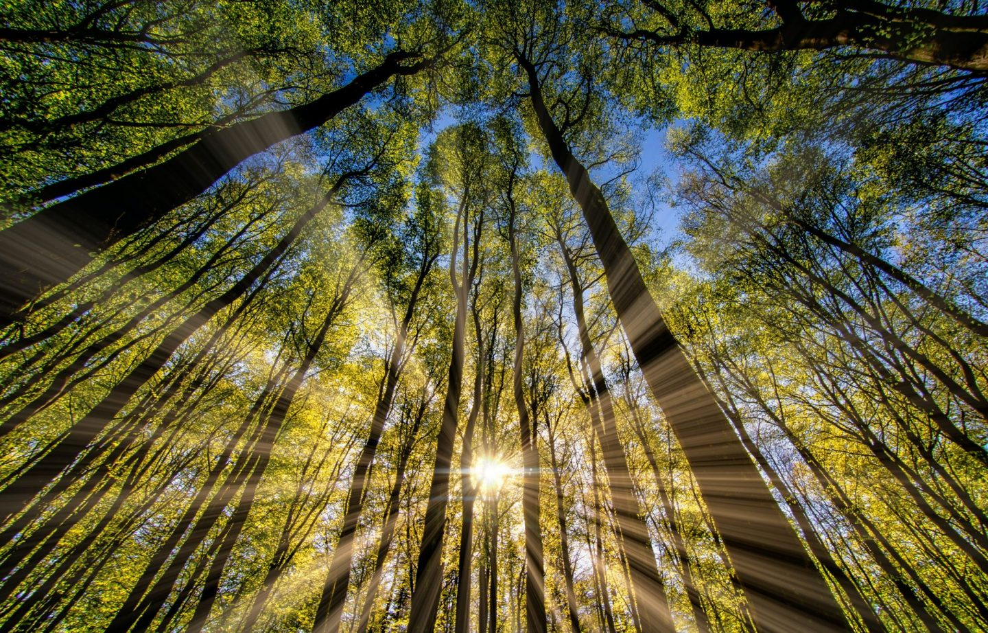 How Sunlight Makes The World A Better Place
