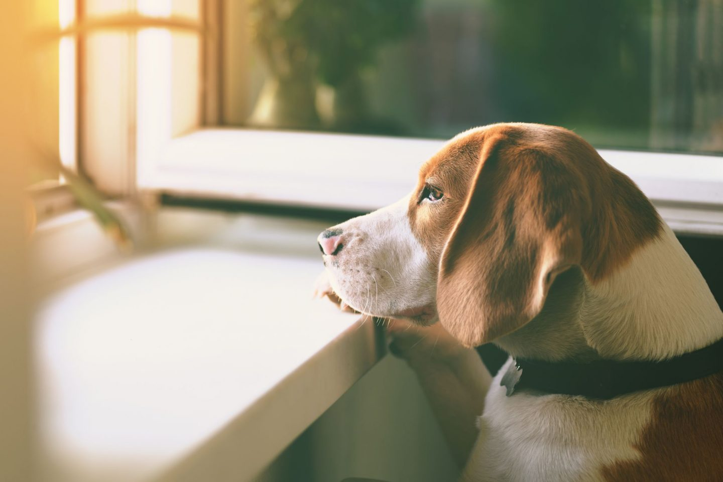 CBD And Pets: 3 Simple Ways To Calm Your Dog's Anxiety